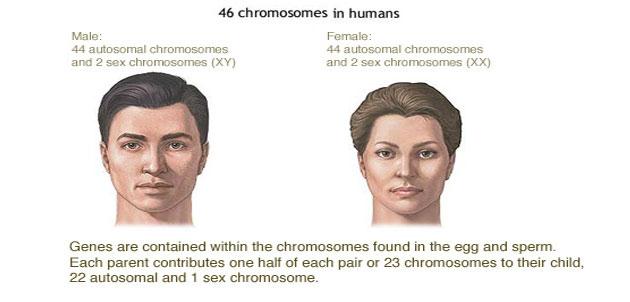 chromosones
