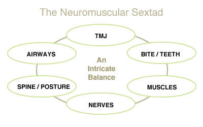 neuromuscular_sextad